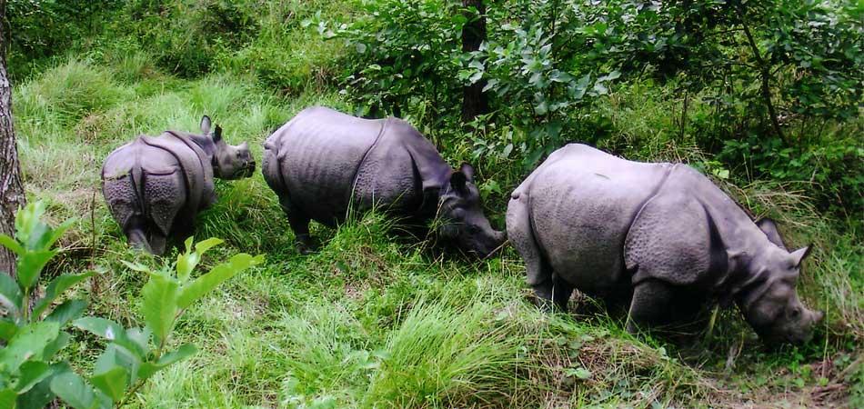 Nepal Jungle Safari