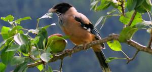 Bird_Rustik_Travel