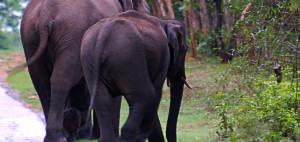 Elephants in Wayanad_Rustik Travel