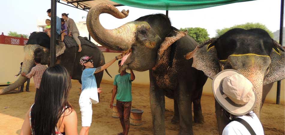 Rustik_Travel Living_it_up_at_Magnificent_Jaipur_Elephant