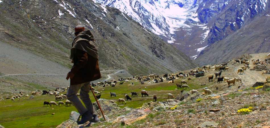 A Shepherd in Demul_Purvash_Jha_Rustik_Travel