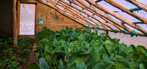 The_Insides_of_a_greenhouse_Eric_Wardell_Rustik_Travel