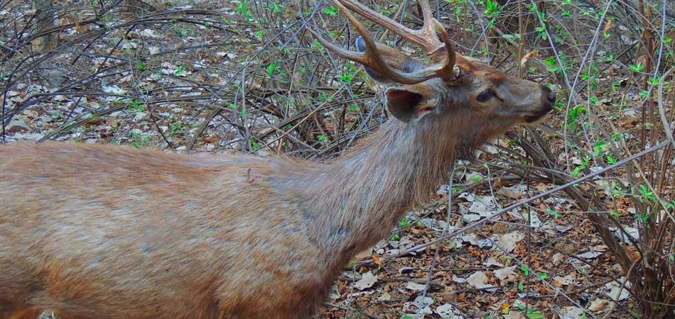 At Ranthambore National Park
