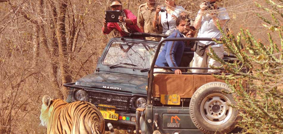 Other animals at Ranthambore National Park