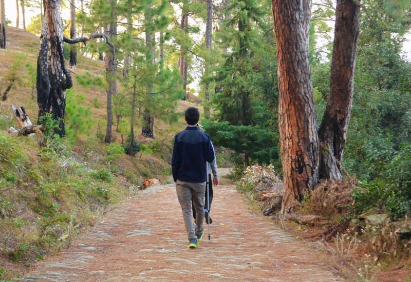 Woods in Kumaon