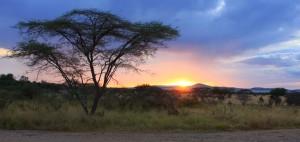 African Safari by Rustik Travel