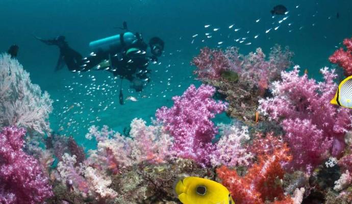 Andaman Diving_Rustik Travel